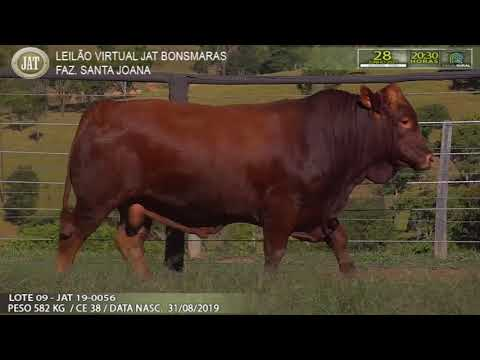 LOTE 009