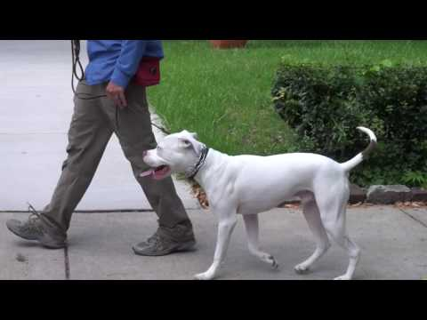 How To Train a Deaf Dog | K9 Connection Dog Training in Buffalo NY