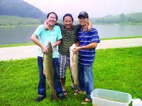 Cận cảnh cá chép, cá trắm ăn mồi quan sát để có nhiều kinh nghiệm câu cá  p3 - Fishing
