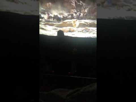 Lion King 2019 Stampede Scene Youtube