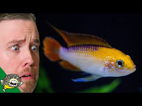 HOW DID I SPEND SO MUCH? TROPICAL FISH UNBOXING