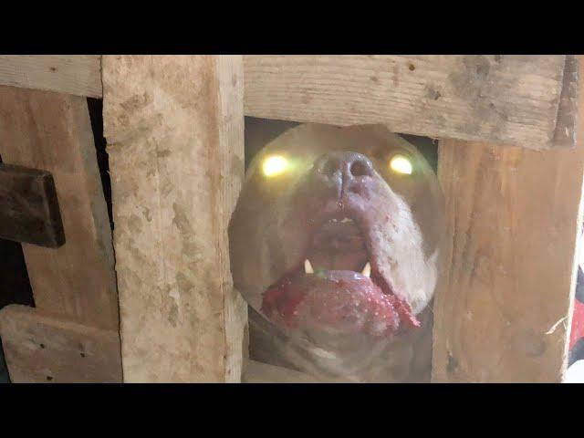 نقل كلب شرس ومجنون صاحبه من ذوي الاحتياجات الخاصه لا مزح مع هذا الكلب مع جمال العمواسي