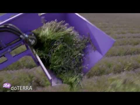 Ask dōTERRA: Bulgaria and Lavender