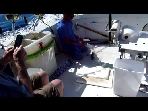 Deep Sea Fishing With Die Hard - Maui Hawaii