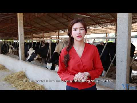 Lao dairy farm carves out healthy market niche