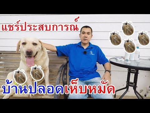 วิธีกำจัดเห็บหมัดแบบได้ผล100% เห็บหมา เห็บสุนัข ด้วยยากำจัดเห็บหมัด Nexgard Spectra Bravecto