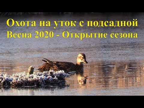 Охота на уток с подсадной - Весна 2020, Открытие