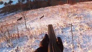Охота на зайца - Двойка и работа со стойкой - Охота с дратхааром