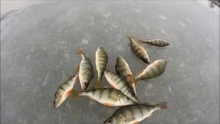 Риболовля на окуня в ''глухозимье'' з ''останньому'' льоду.