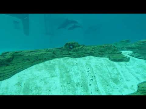 SEA Aquarium Dolphin - Universal Studios Singapore