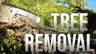Tuesday Tree Removal