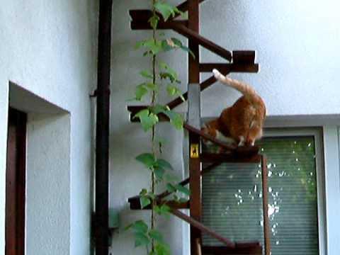 cat ladder katzentreppe self made cat mikki youtube. Black Bedroom Furniture Sets. Home Design Ideas