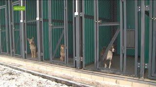Приют для бездомных собак в Абакане оказался переполнен сразу после открытия
