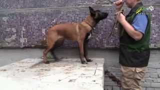 Dog training How to teach commands Sit, Down and Stand