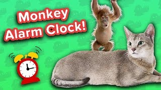 Monkey Alarm Clock & Grinning Horses! // Funny Animal Compilation