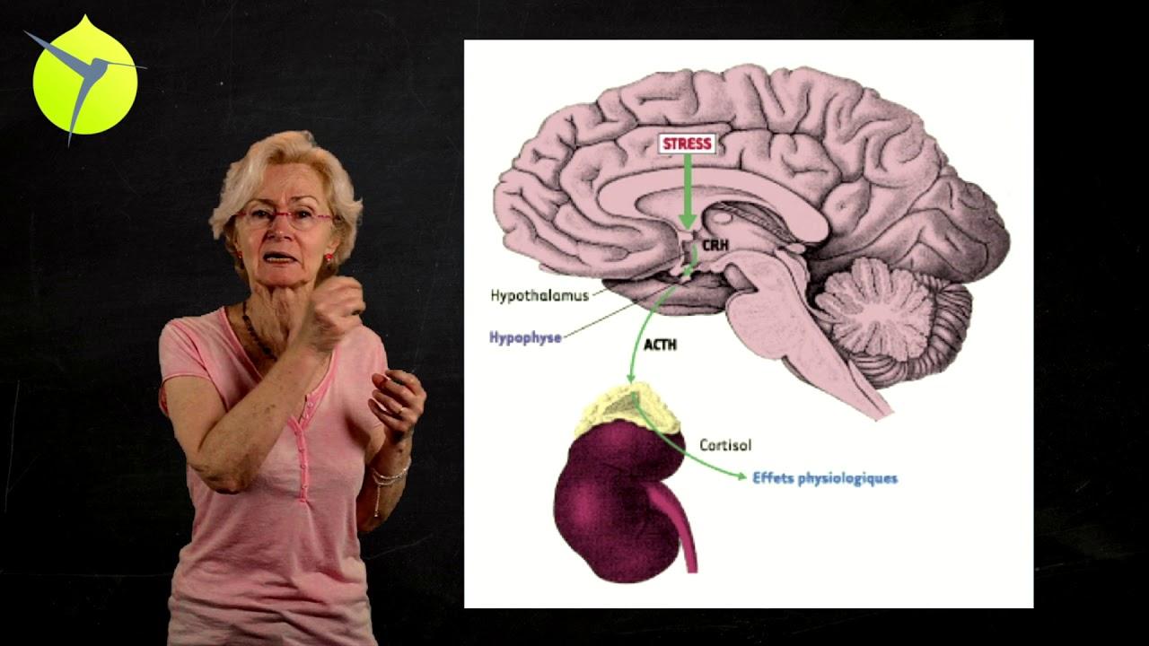 Dr Catherine Gueguen L'application des neurosciences en classe