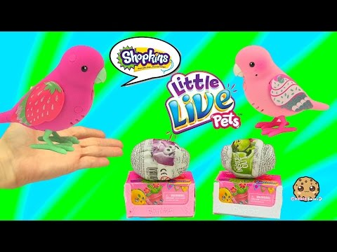 Little Live Pets Birds Talk & Sing - Unboxing 2 Chocolate Surprise Eggs + Shopkins Blind Bag