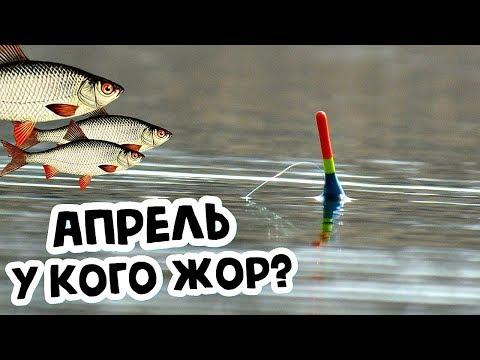 У какой рыбы в апреле жор? Какую рыбу ловить в апреле? Кто клюет в апреле?