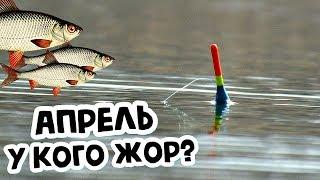 У какой рыбы в апреле жор Какую рыбу ловить в апреле Кто клюет в апреле