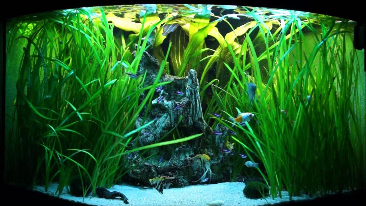 Juwel trigon xxl aquarium fish tank virtual aquarium blue for Skalar aquarium