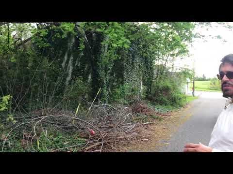 Abandoned and Overgrown - Salem, NJ
