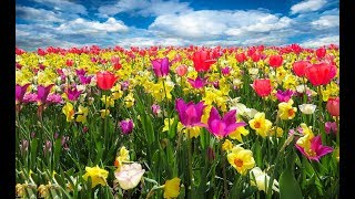 Beautiful Flowers in Bloom in the World with Relaxing Nature Sounds | Nature Video