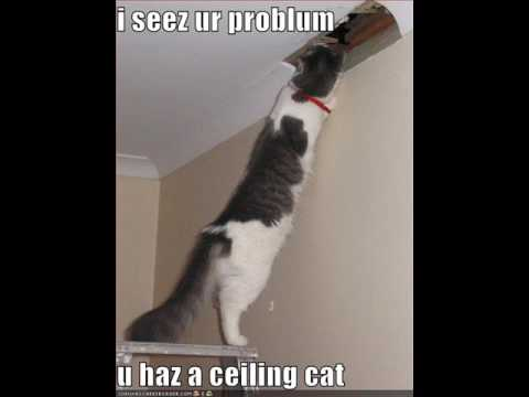 104 Śmieszne koty i kocięta / 104 Funny cats & cats