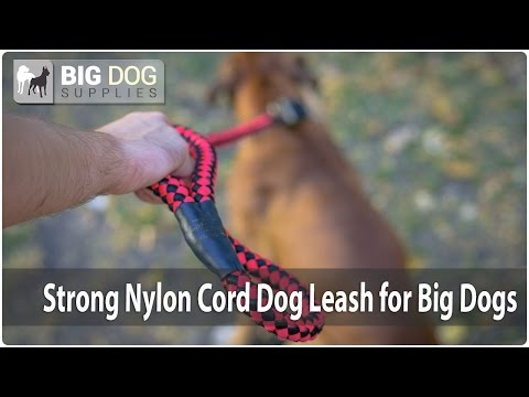 How to Walk a Boxer Using New Design Nylon Dog Leash