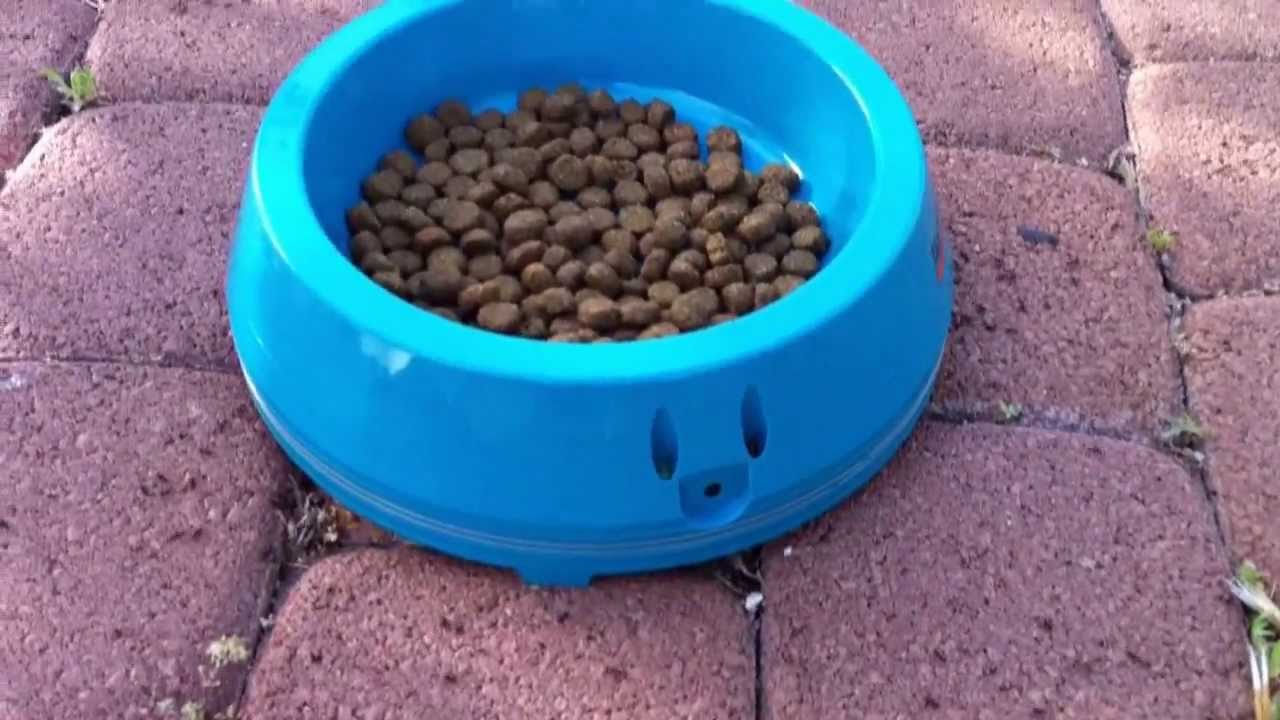 how to keep a dog outside year round