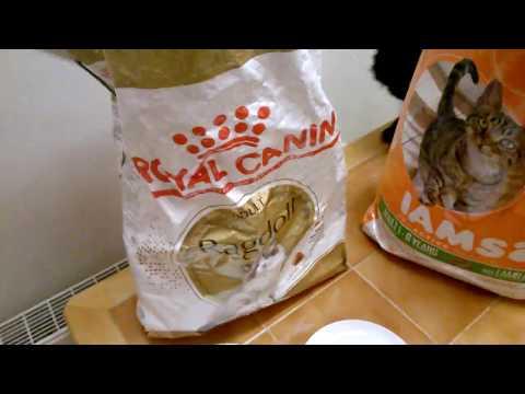 Royal Canin Vs Iams Cat Food