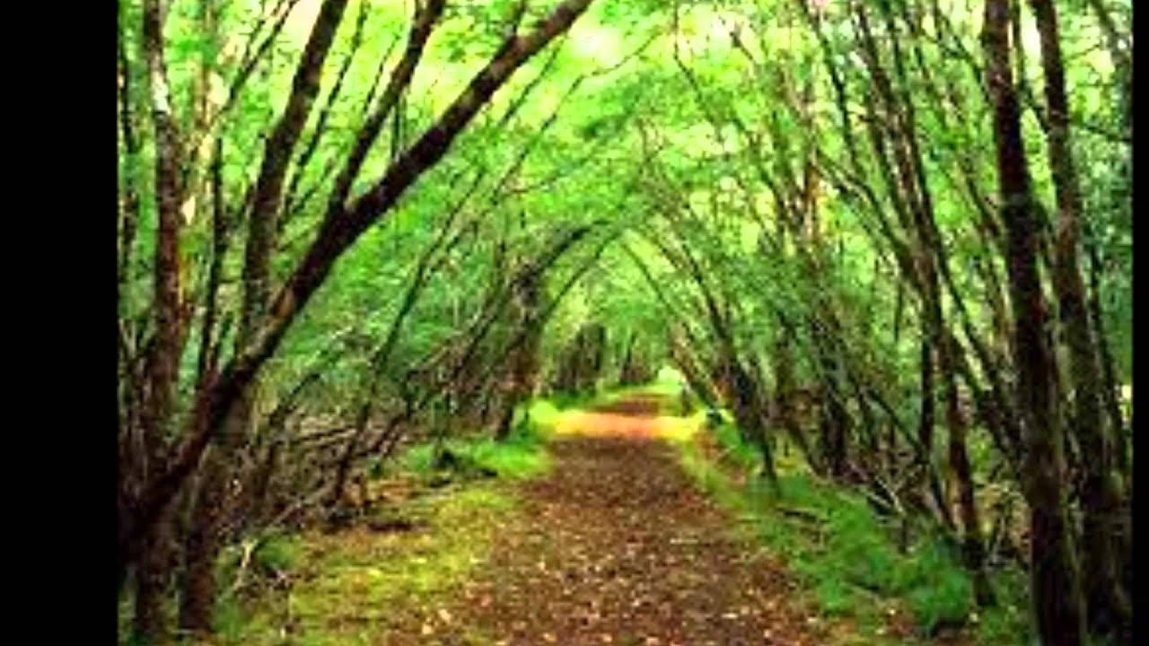 description of a forest