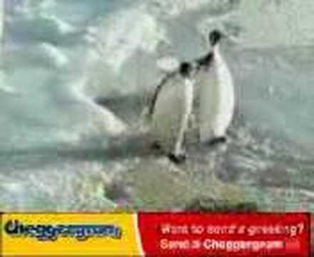 Tučňák Zmrd