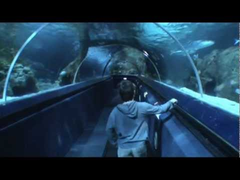 Thumbnail: Shark Dive at Kelly Tarltons