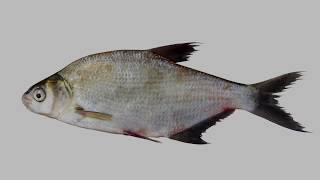 HEALTH BENEFITS OF EATING FATTY FISH - BEST HEALTH TIPS