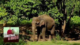 Таиланд. Слоны. Часть 1  🐾 Про животных и людей 🌏 Моя Планета