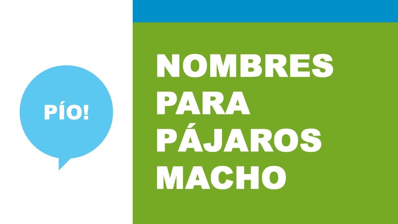 Nombres De Pajaros En Espanol