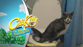 Cat Toilet Training - Easy as 1, 2, 3 - CitiKitty