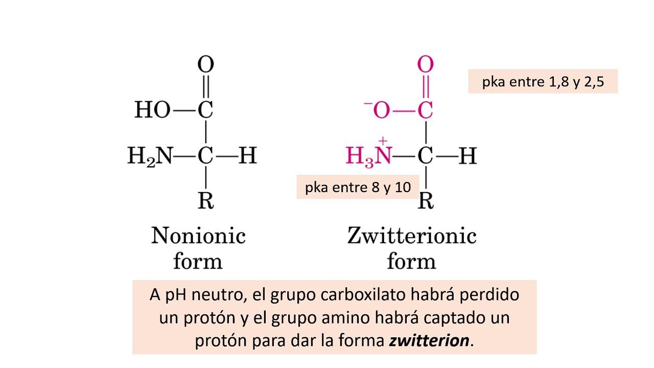 para que son los aminoacidos en el ejercicio