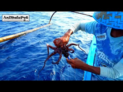 Surigao Traditional Method Of Catching Octopus And Cuttlefish