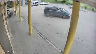 В Правдинске водитель минивэна сбил собаку, полиция проводит проверку