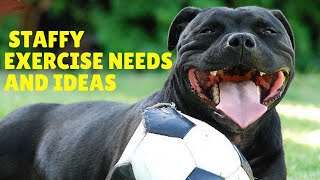 Staffy Exercise Needs and Ideas [Staffordshire Bull Terrier]