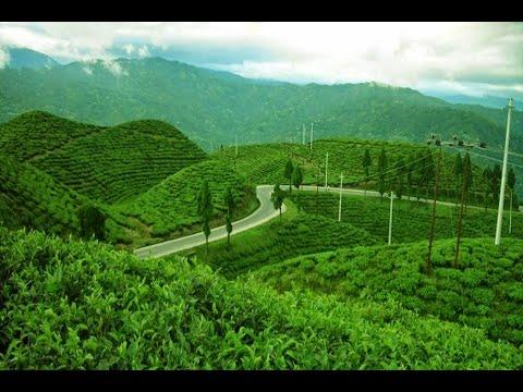 My Trip My Adventure, Kebun Teh di Perjalanan Situs Megalithikum Gunung Padang, Cianjur