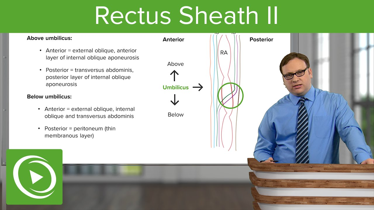 Rectus Sheath II – Anatomy | Lecturio