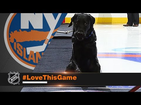 Download Youtube: Charlie the dog drops ceremonial first puck