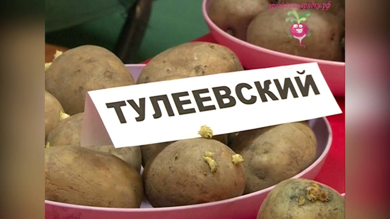 6 серия игры ArcheAge с Юрой и Наилем((семена картофеля)) - YouTube