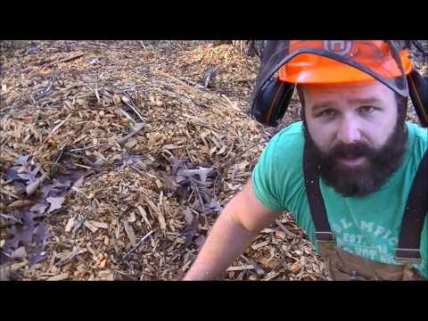 Forest management:Thinning out diseased undesirable trees; Chainsaw tips