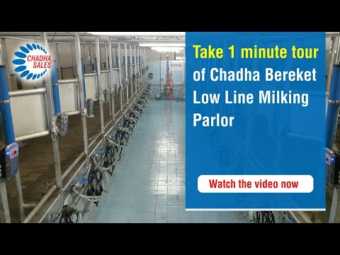 Chadha Bereket Low Line Milking Parlour. Milking Machine And Milking Equipment For Cow