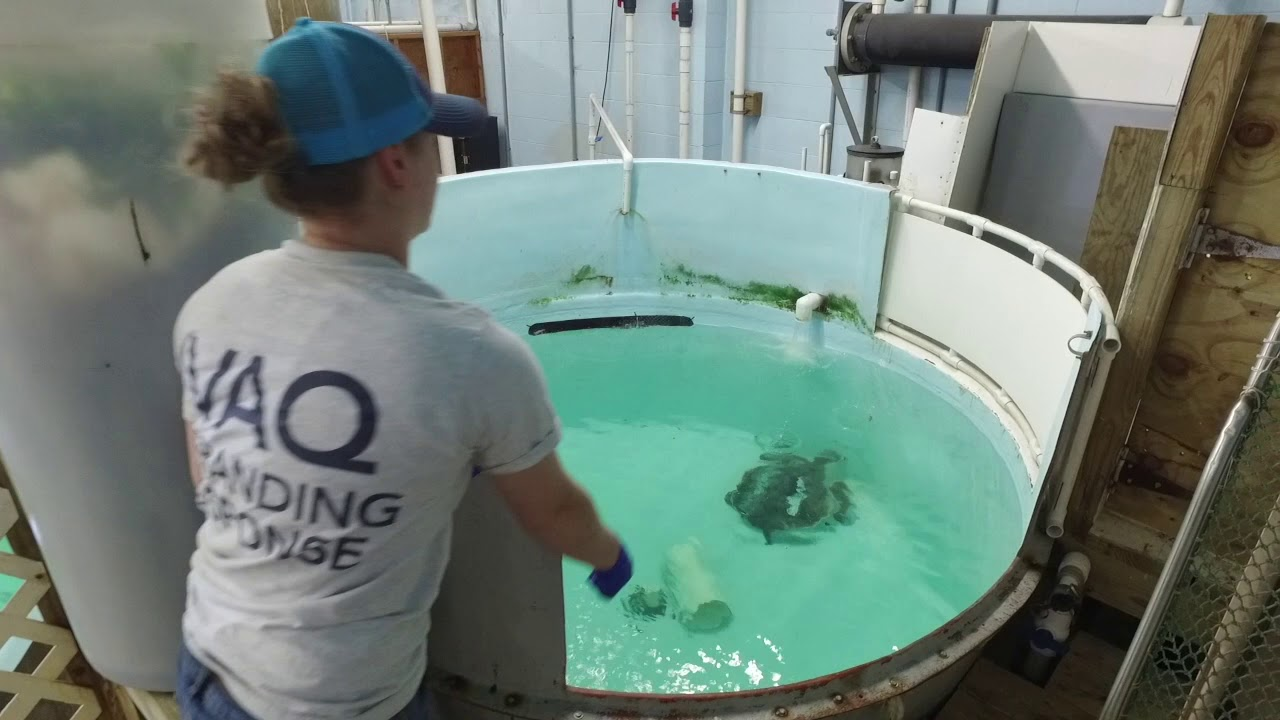 Virginia Aquarium Marine Science