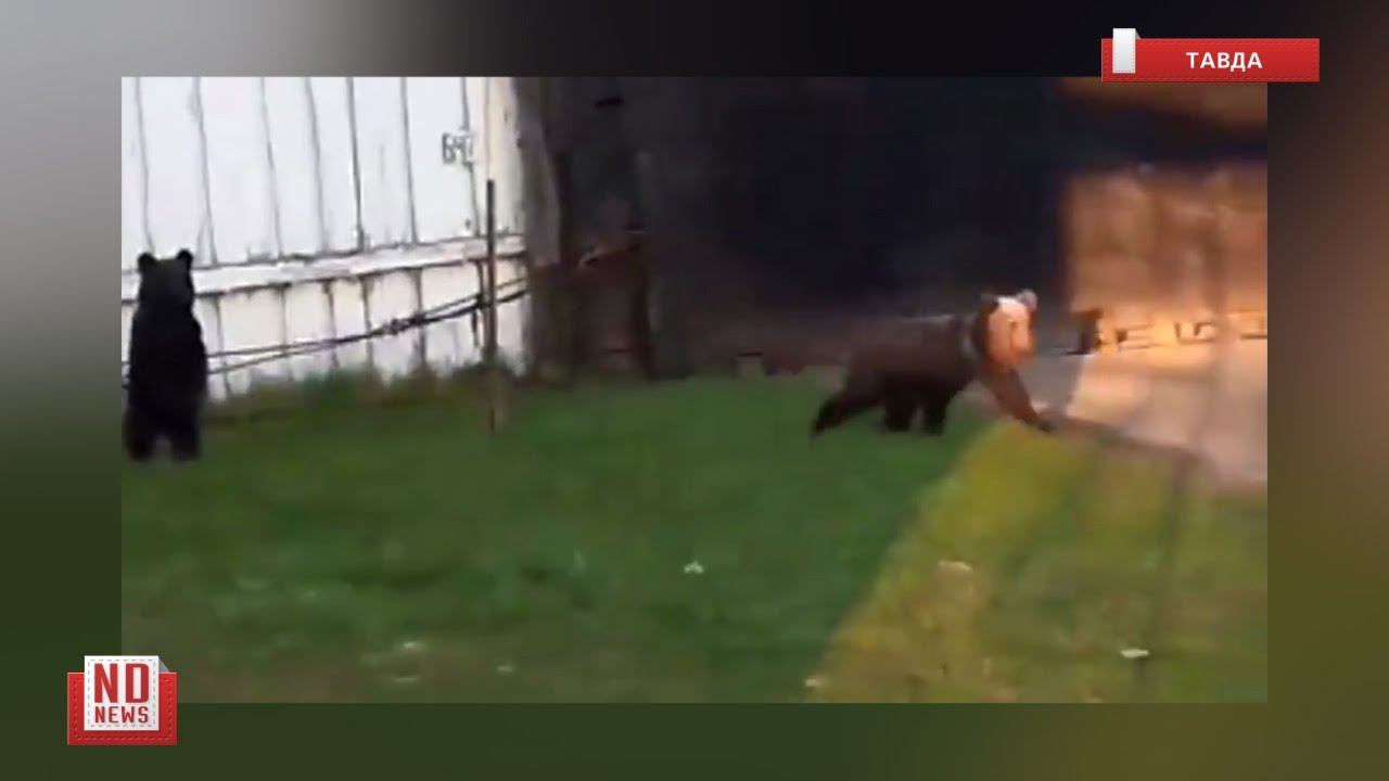 Медвежата пришли в исправительную колонию
