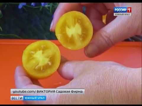 """Новый сорт томатов """"Банановые ноги"""""""